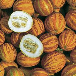 Melon, Queen Anne's Pocket