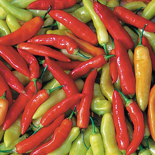 All Peppers