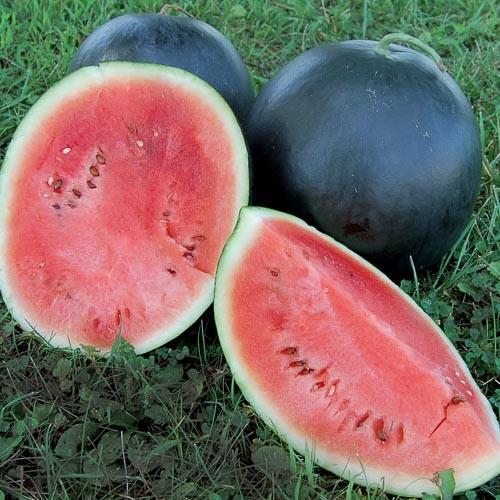 Watermelon, Blacktail Mountain