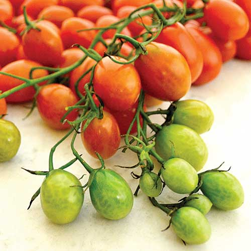 Shop Cherry Tomatoes