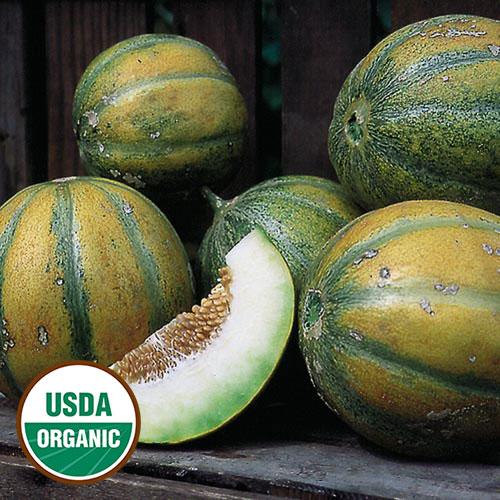Melon, Ha'Ogen