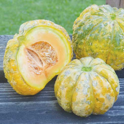 Melon, Prescott Fond Blanc
