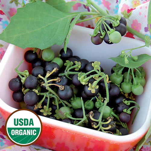 add wishlist source outdoor add to sunberry organic seed savers exchange