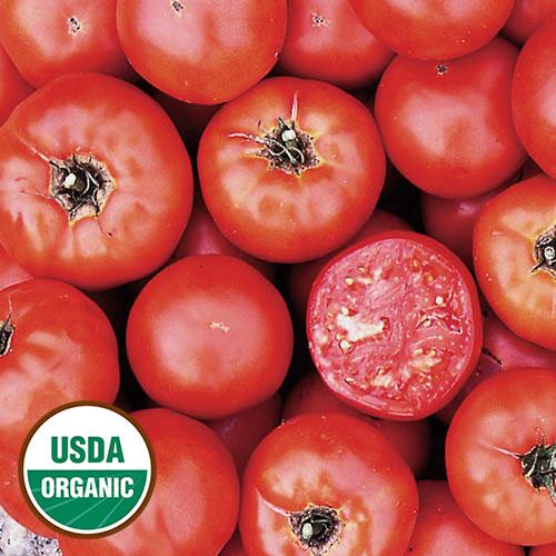Tomato, Wisconsin 55