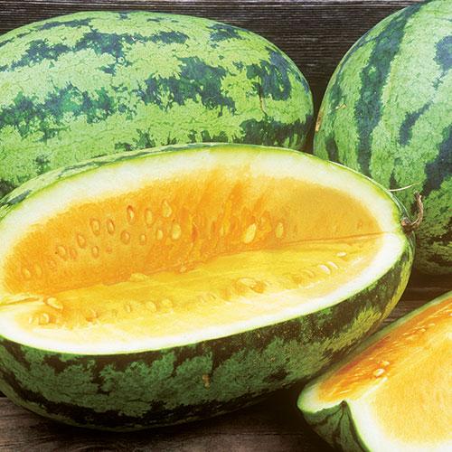 Orange Glo Melon Heirloom Premium Seed Packet
