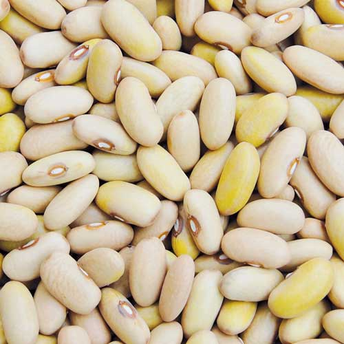 Bean, Arikara Yellow