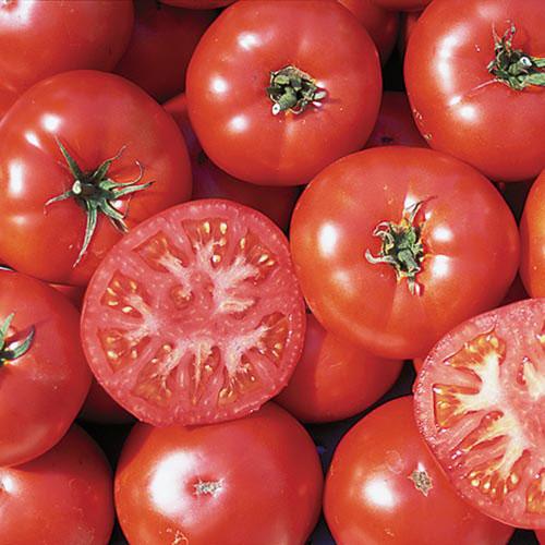 Tomato, Trophy