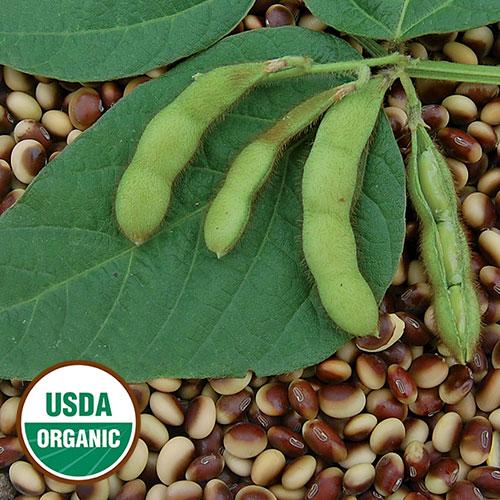 Soybean, Agate