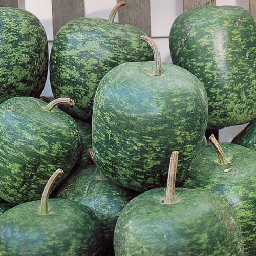 Gourd, Apple