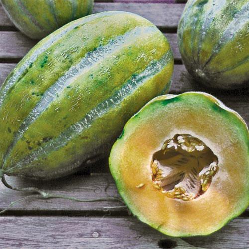 Melon, Bidwell Casaba