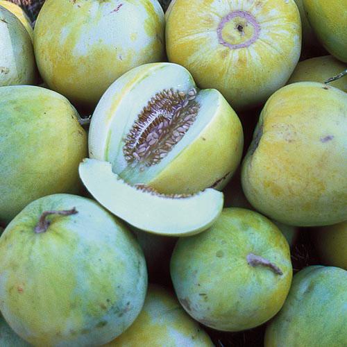 Melon, Sakata's Sweet