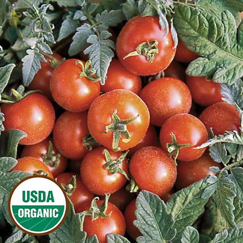 Tomato, Velvet Red