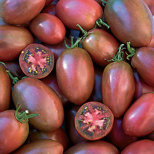 Tomato, Ukrainian Purple