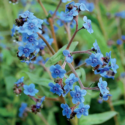 Flower, Firmament