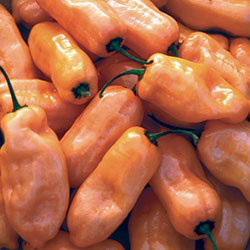 Pepper, Habanero Peach