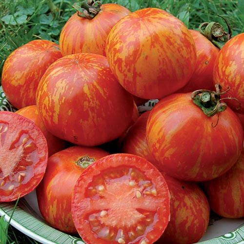 Tomato, Red Zebra