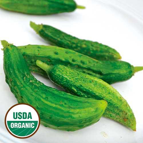 Cucumber, Parisian Pickling