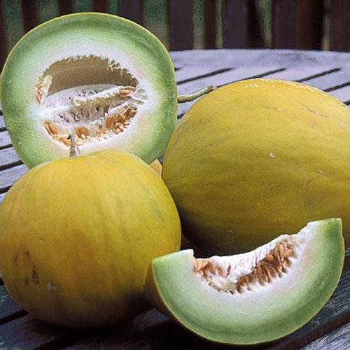 Melon, Boule d'Or