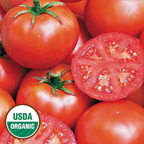 Tomato, John Baer