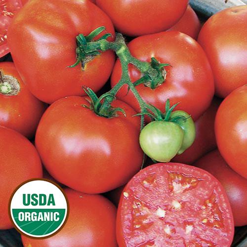 Tomato, Earliana