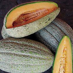 Melon, Healy's Pride