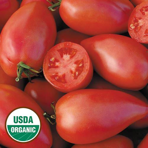 Tomato, Sheboygan