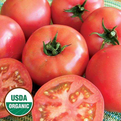 Tomato, Trucker's Favorite Pink