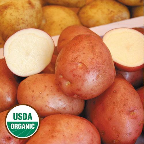 Potato, Desiree