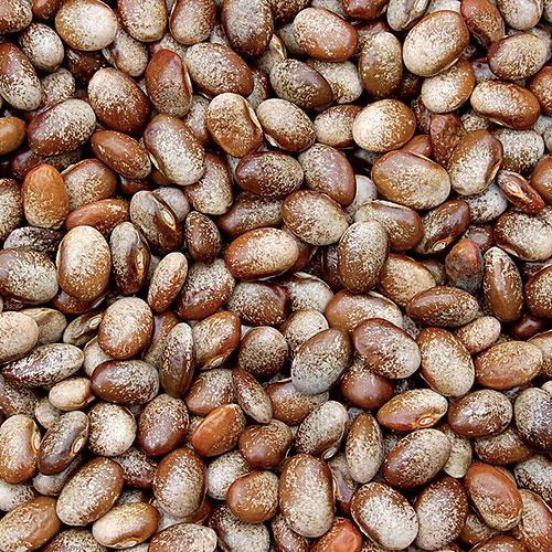 Bean, Turkey Craw