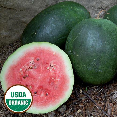 Watermelon, Stone Mountain