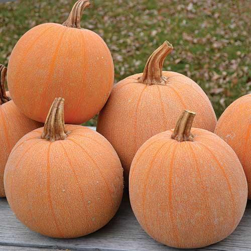 Image result for rare pumpkins