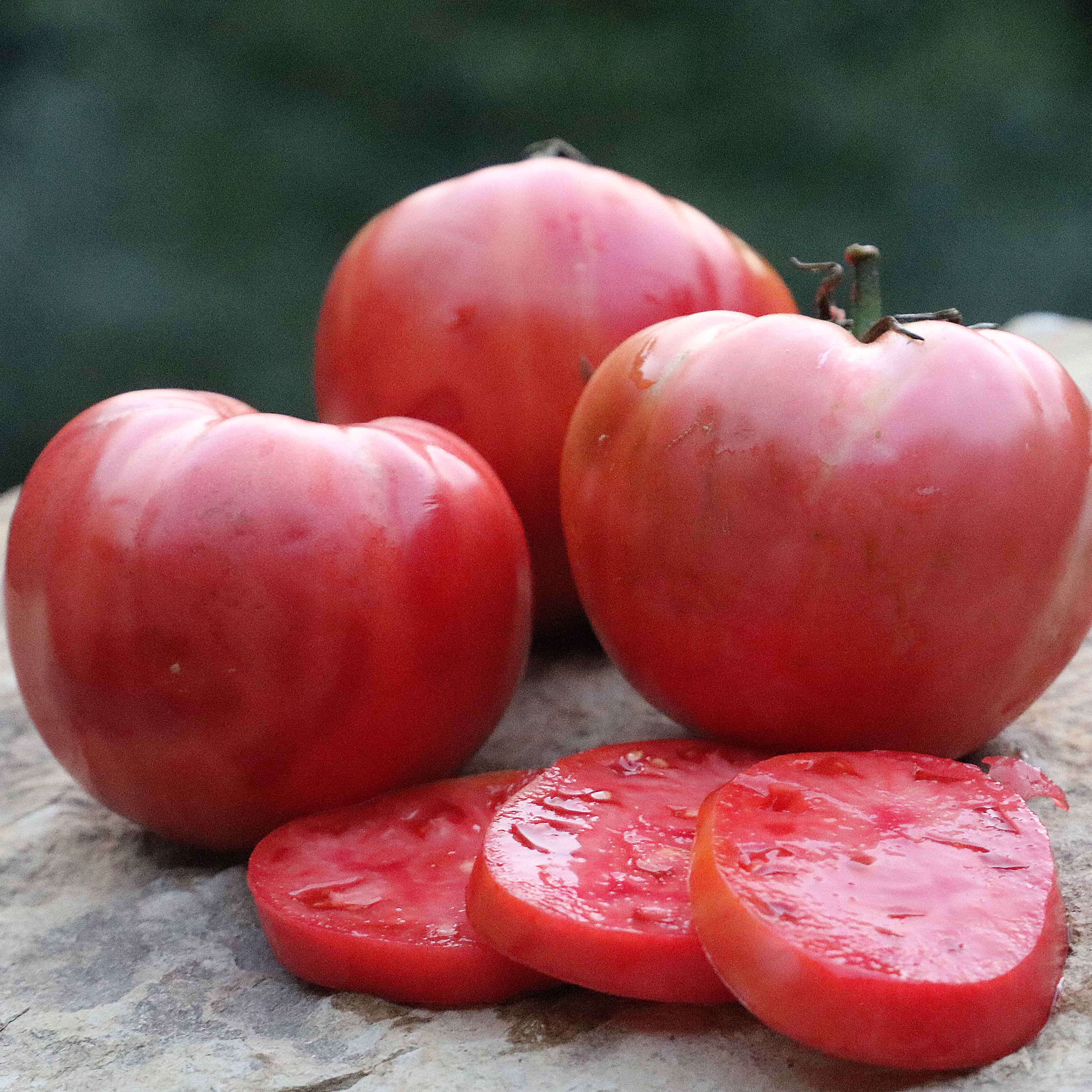 Tomato, Mamie Brown's Pink