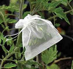 Blossom Bags