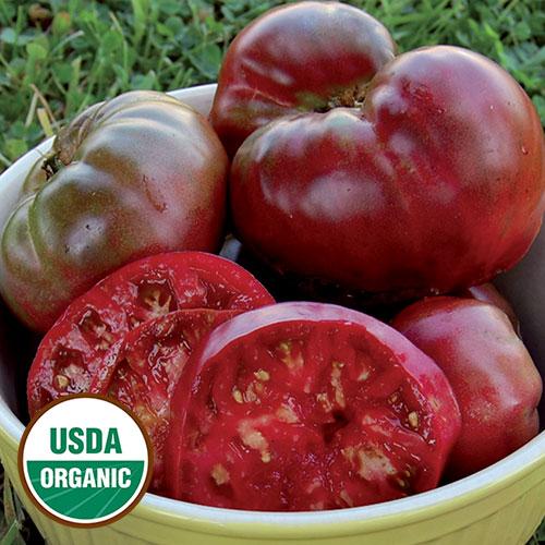 Transplant, Tomato-Black Krim