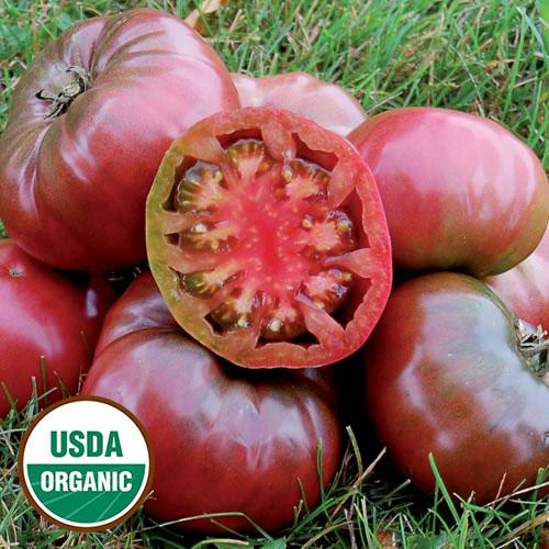 Transplant, Tomato-Cherokee Purple