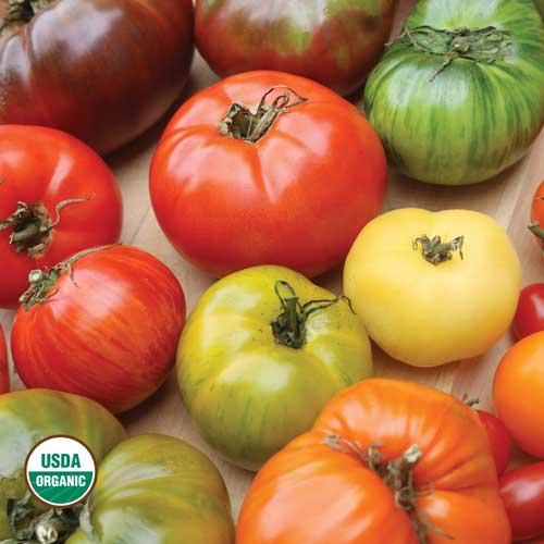Transplant, Tomato-Sampler