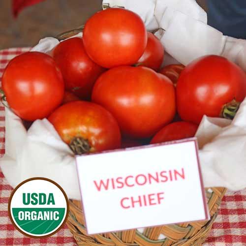 Tomato-Tomato-Wisconsin Chief Trans