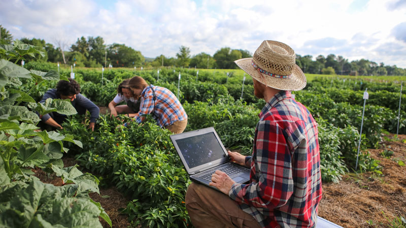 Evaluating crops in the field