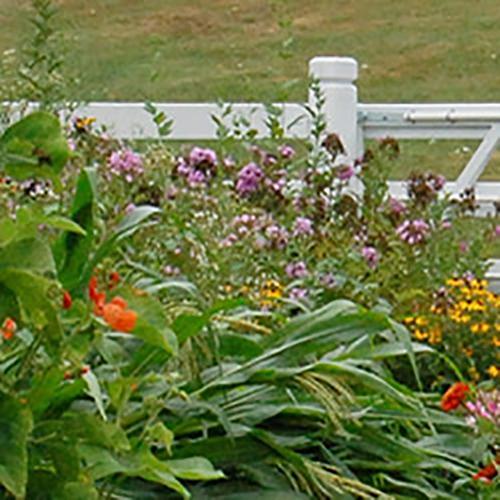 Plan A Seed Garden
