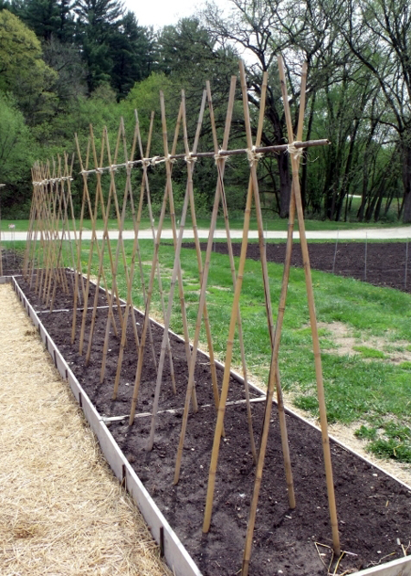 Garden Trellis Ideas Seed Savers Exchange
