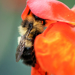 Pollinator-friendly gardens