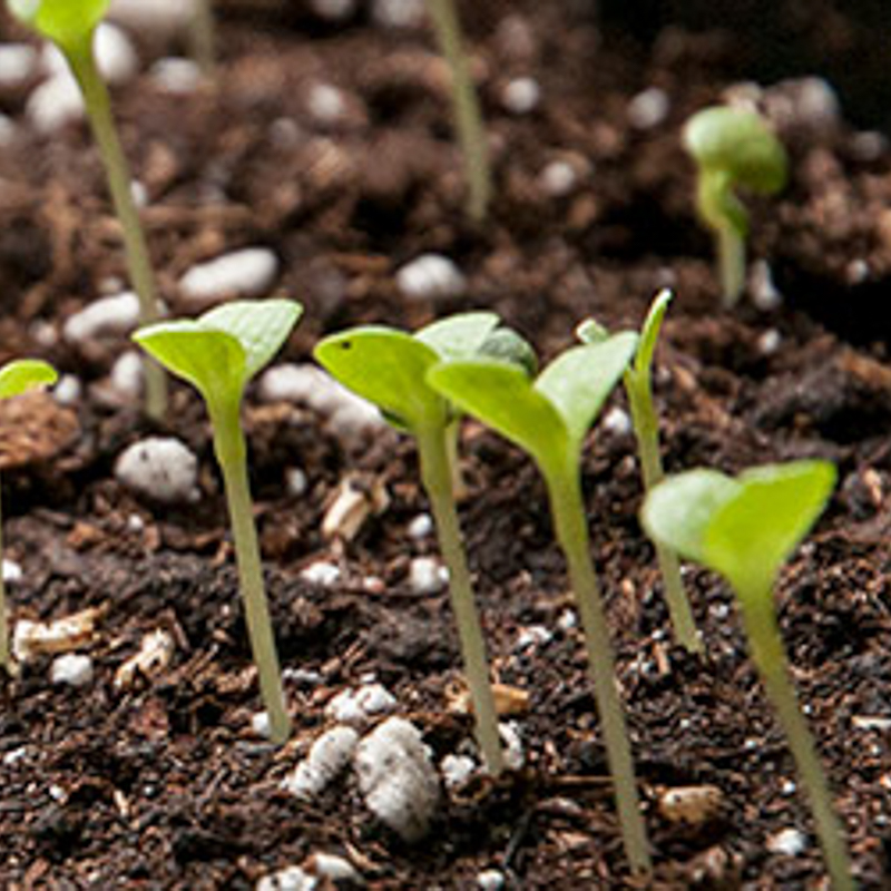 Learn how to start seeds
