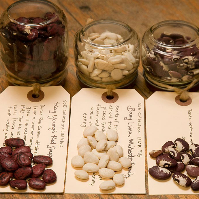 Seed Saving Basics