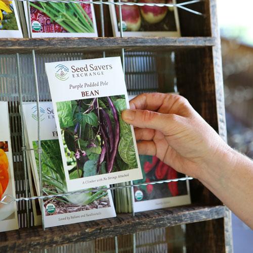 Organic Herb Seeds - Seed Savers Exchange